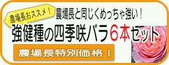 バラ苗特別セット6本セット特別価格
